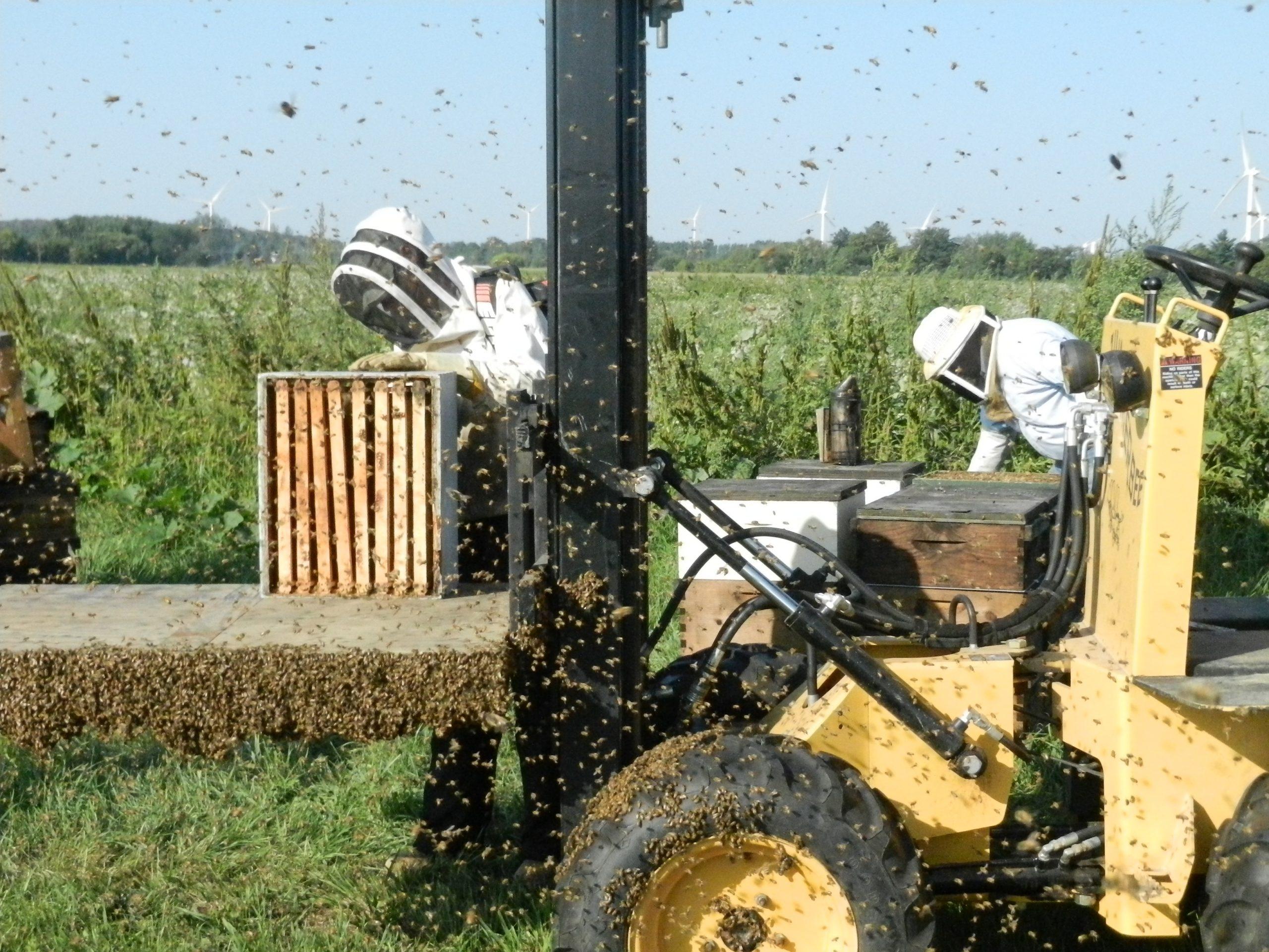 A. H. Apiaries - Beekeepers Harvesting Honey at Michigan Honey Farm