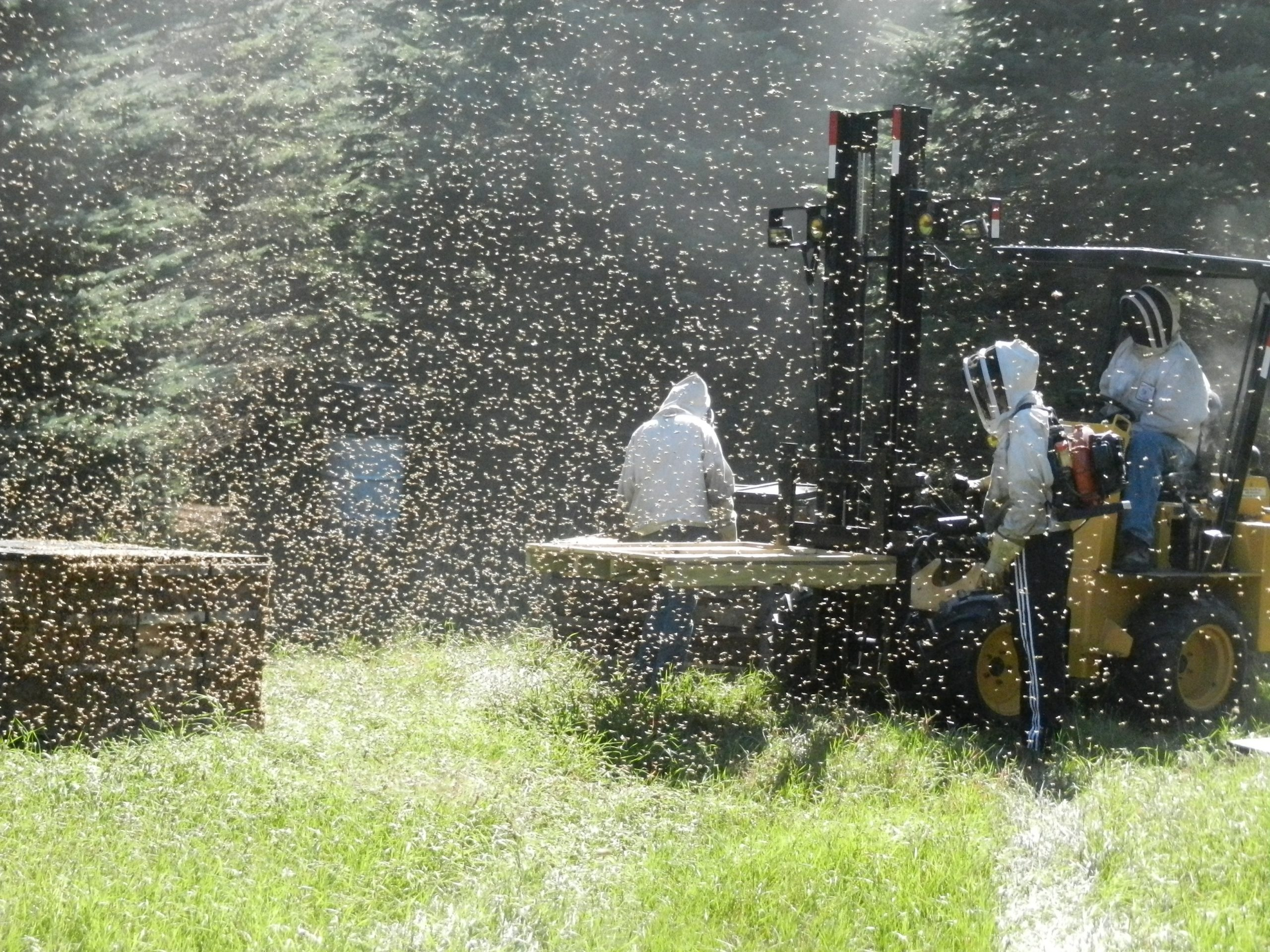 A. H. Apiaries - Beekeepers moving the hives at Michigan Honey Farm
