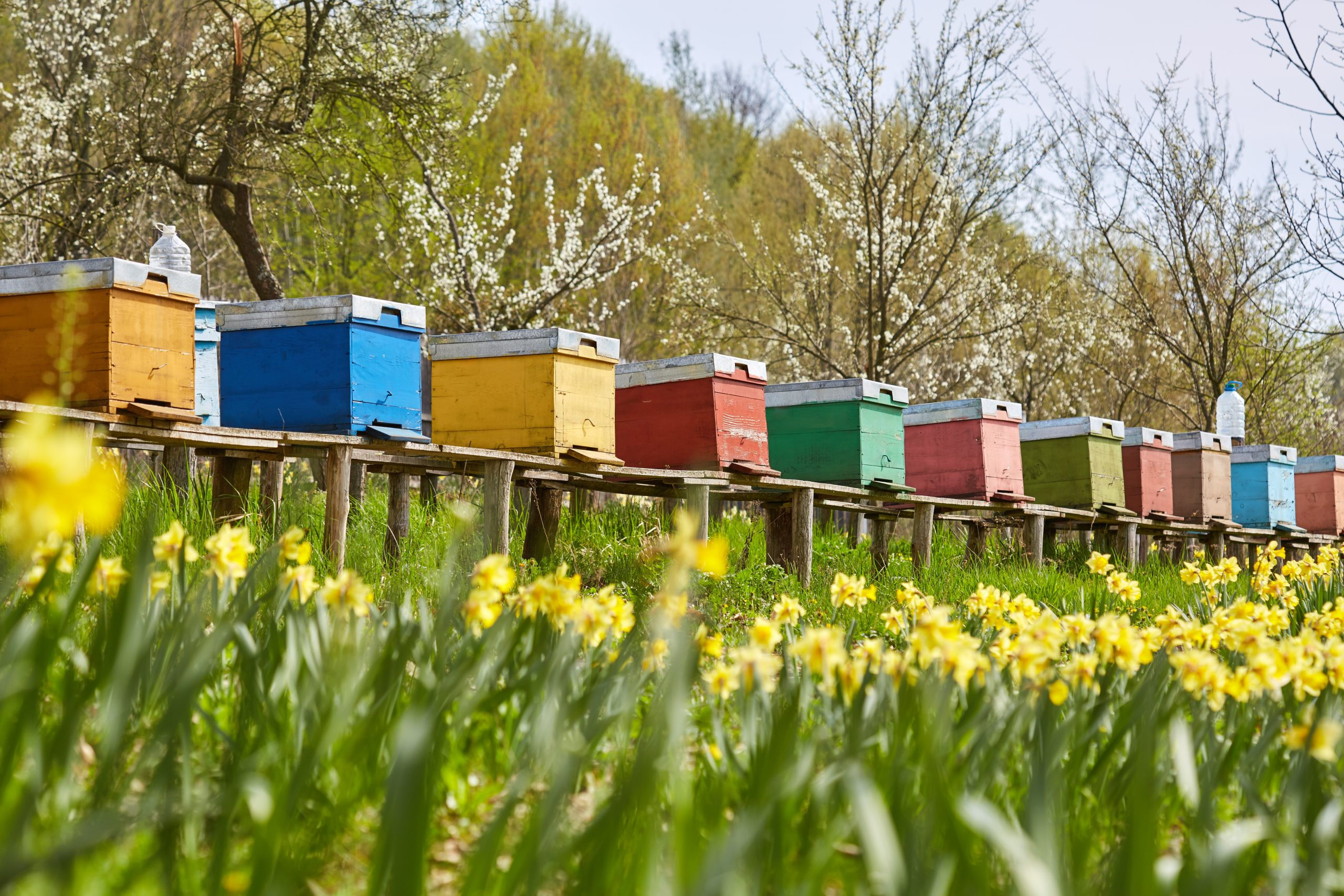 Apiary Positioned Within A Meadow