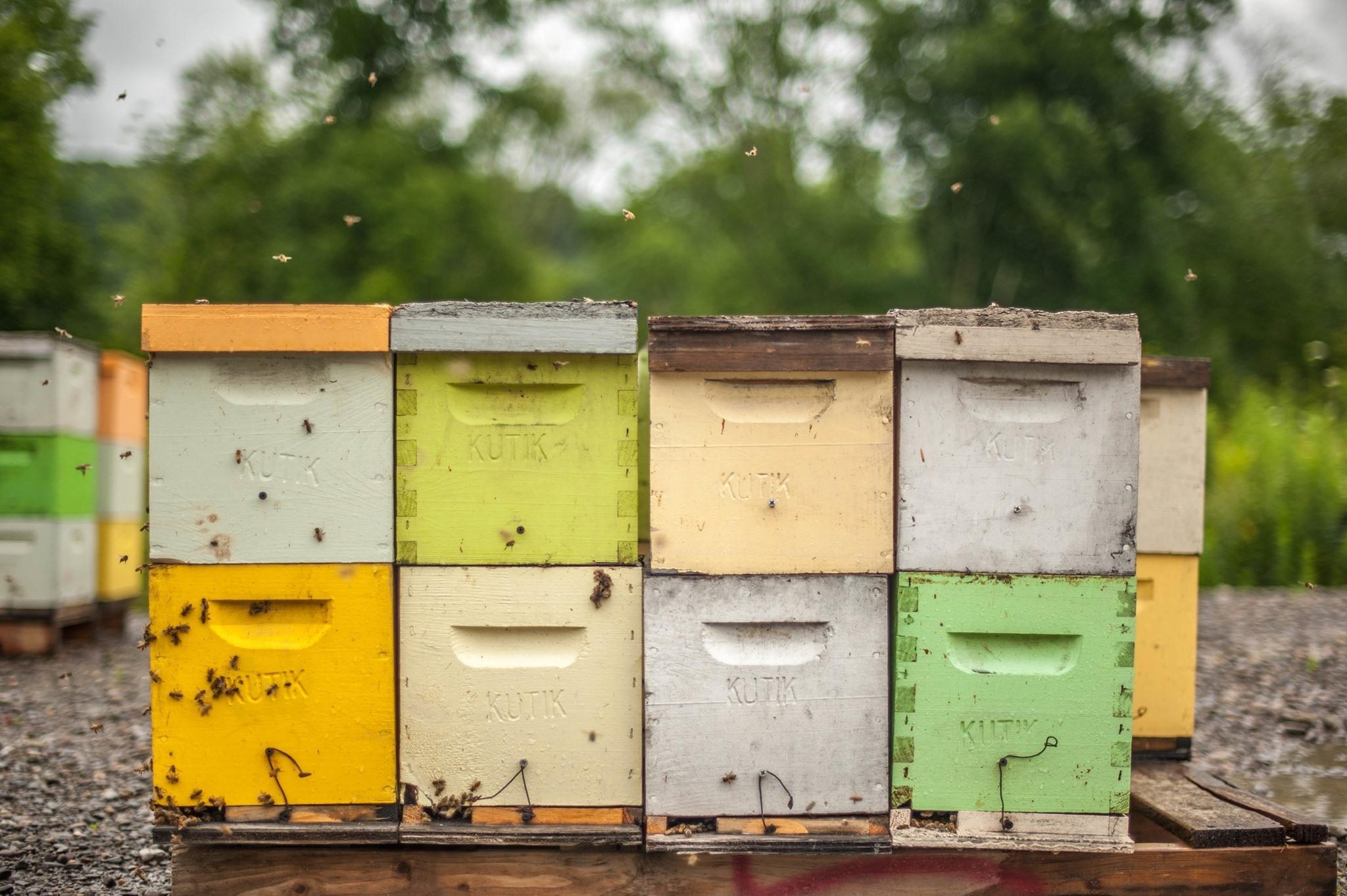 Kutik's - Beehives