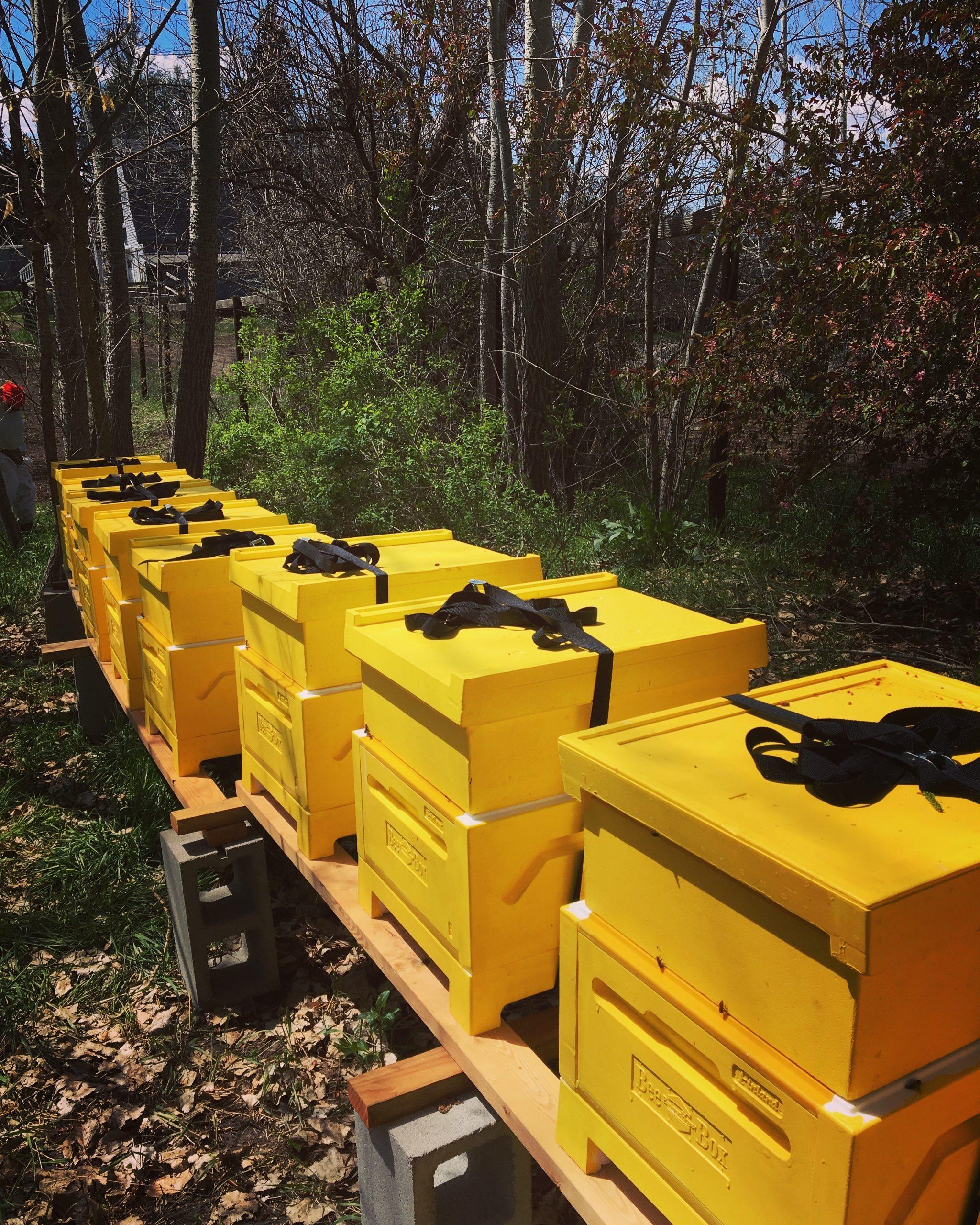 Bjorns Colorado Honey Beehives