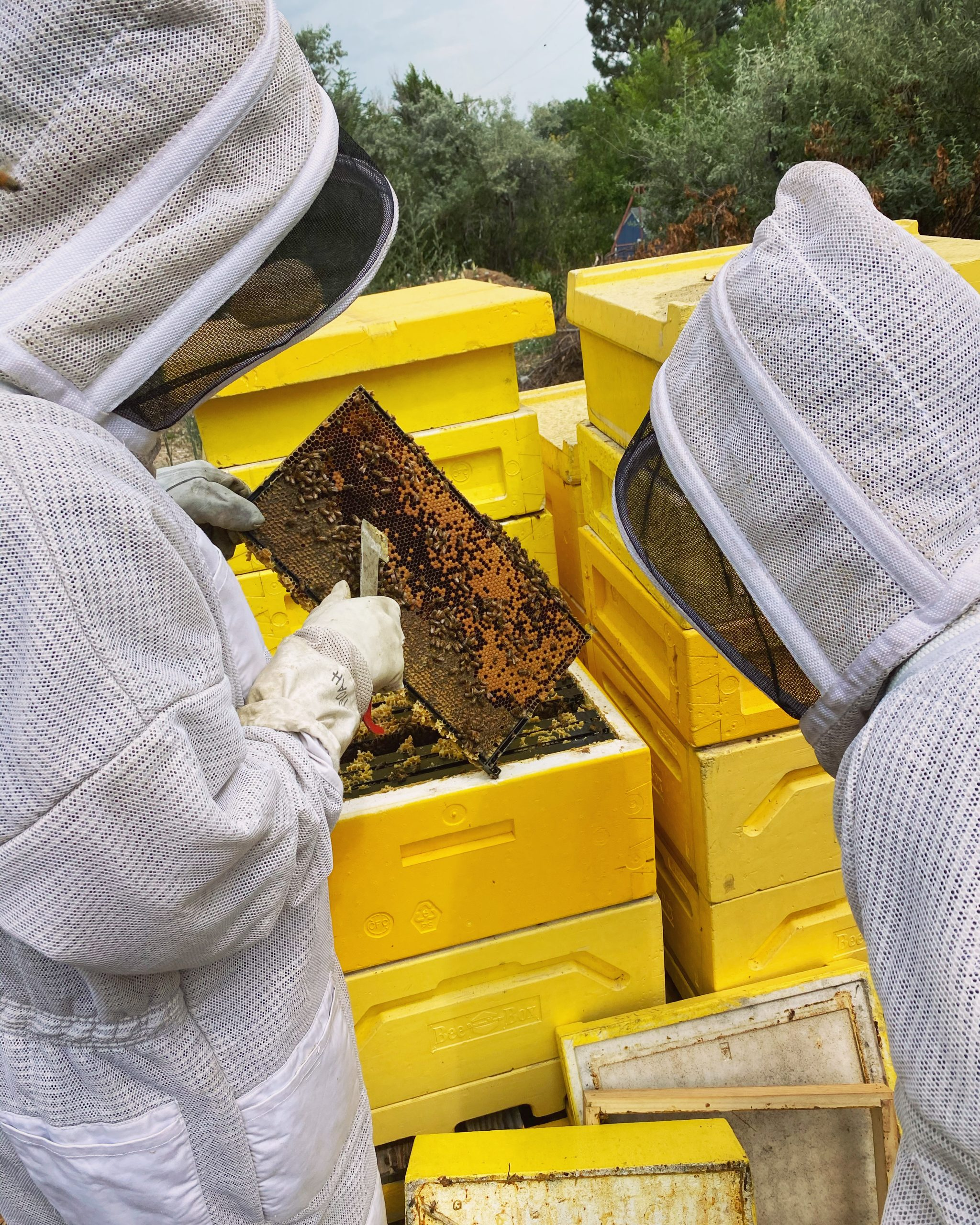 Bjorns Colorado Honey - Beekeepers with Honey Frame