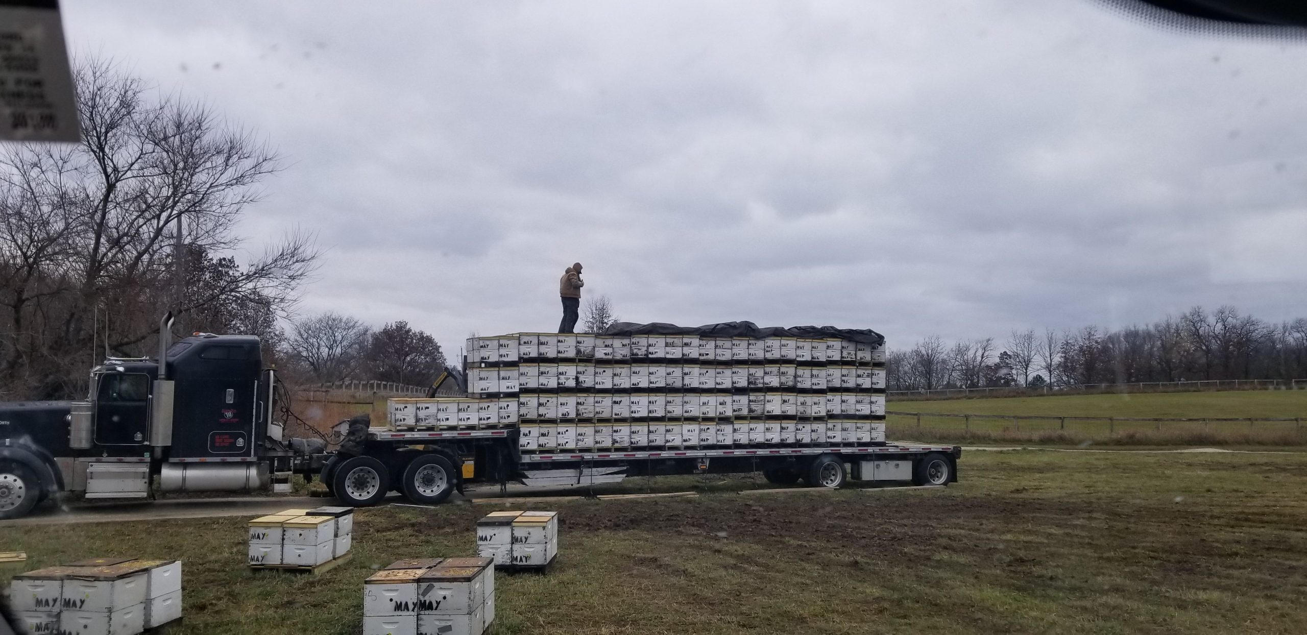 Adding Bees to Go to California for Almond Pollination
