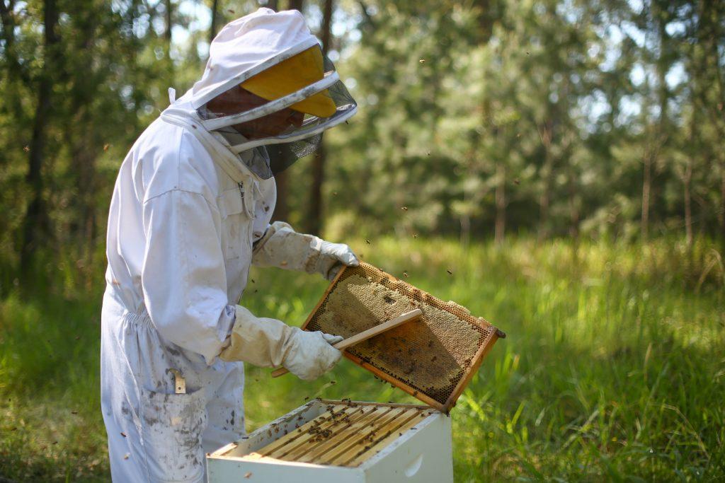 Beekeeper Extracting Honey on Honey Farm